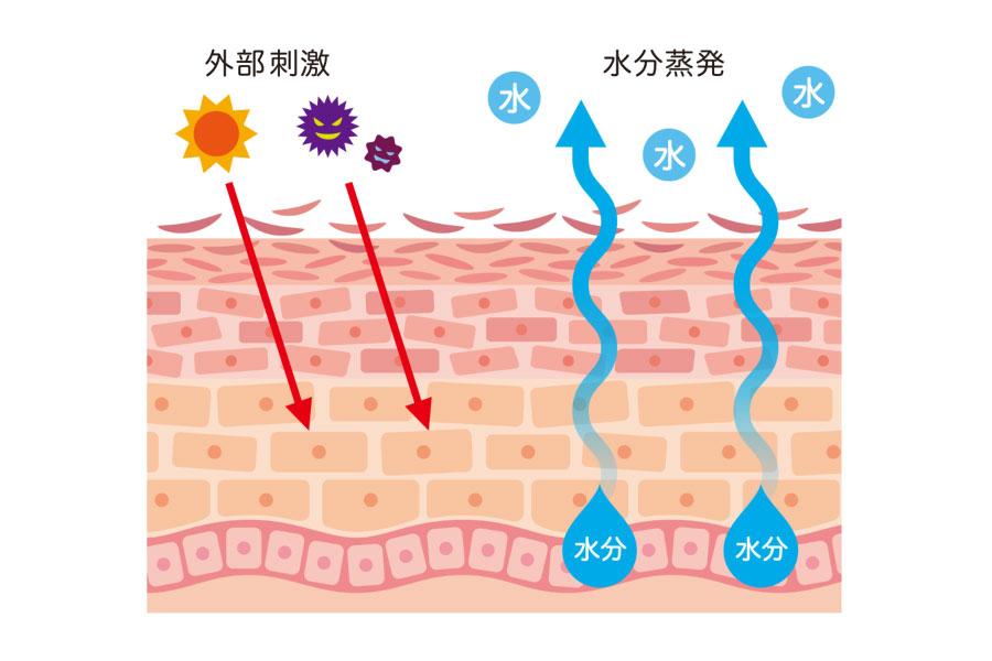 敏感肌 (バリア機能の破綻)