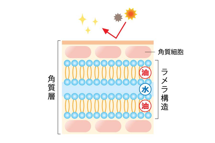 セラミド(細胞間脂質)