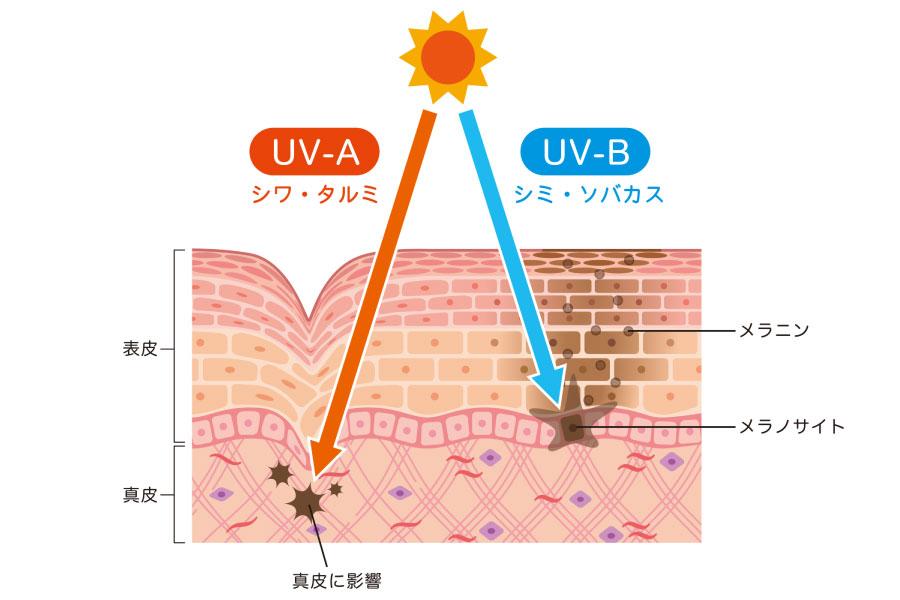 紫外線とメラニン