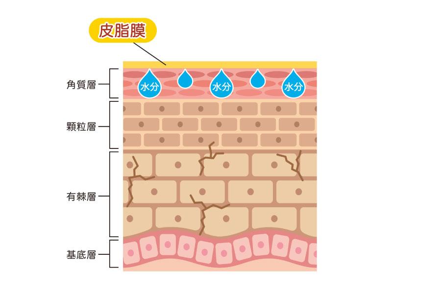 保湿の不足による脂性肌